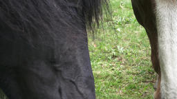 Horses on the ranch eat dry food. Portrait of a horse... Stock Video Footage