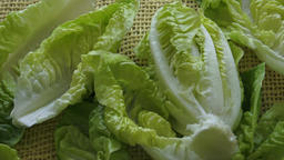 Fresh green lettuce isolated on yellow background Live Action