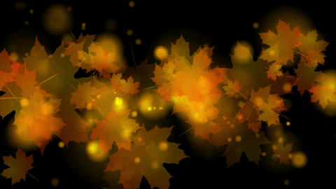 Autumn leaves on black background video animation Animation