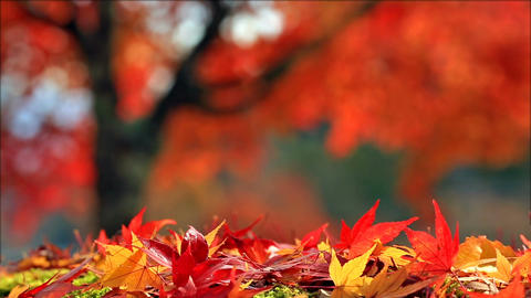 Blurred colorful autumn background Footage