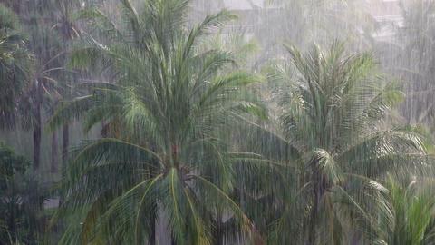 [alt video] Tropical rain