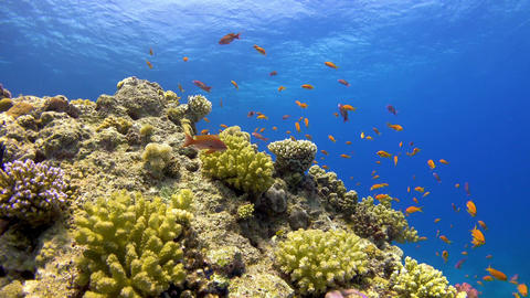 Tropical Fish on Vibrant Coral Reef GIF