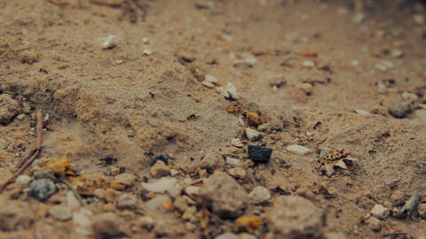 Cinemagraph of closeup shot of a group of black ants walking on dirt Footage