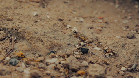 Cinemagraph of closeup shot of a group of black ants walking on dirt ビデオ