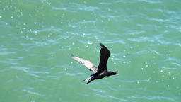 Two cormorants flying away from rock Footage