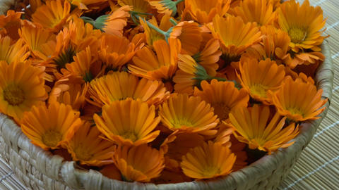 Rotating fresh medical marigold calendula flowers in basket Footage