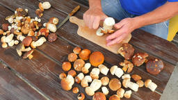 Man hands carefully cleaning wild mushroom with kitchen knife. Hands take mushro Footage