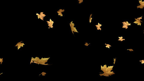 Autumn Leaves Falling With Alpha Channel Loop Footage
