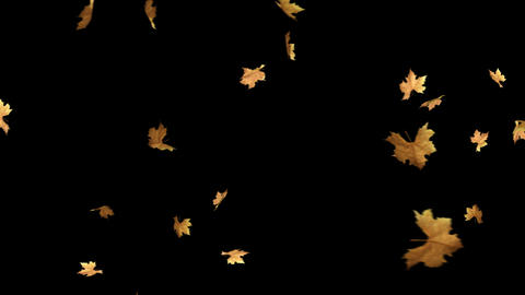 Autumn Leaves Falling With Alpha Channel Loop Stock Video Footage
