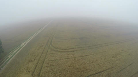 Drone fly height over summer end early morning misty crop fields Footage