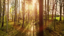 Forest trees woods trees plants nature background summertime aerial view Footage