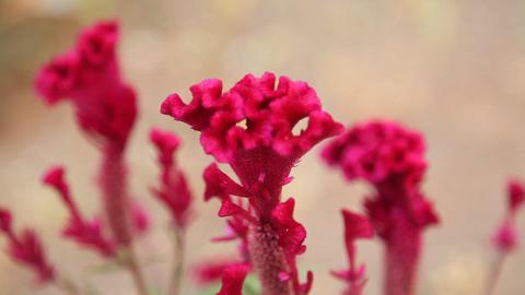 Flowers in the Garden 画像