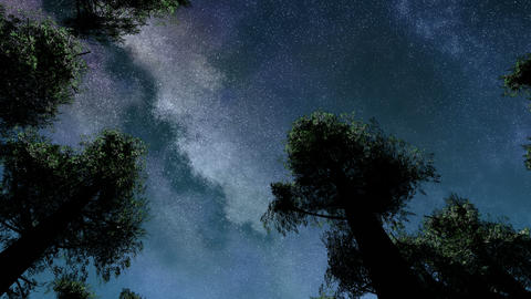 4K TIme Lapse of Stars and Silhouetted Pine Trees Footage
