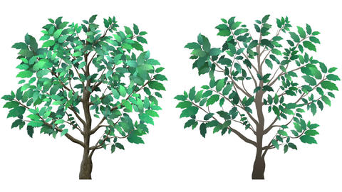 Isolated Growing Tree Animation Footage