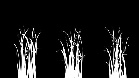 Isolated Growing Grass Elements Animation