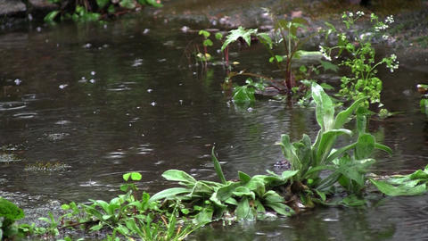 After a torrential spring rain, it made ​​a puddle in the garden. Drops of w Footage