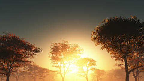 Sunset and forest in fog Animation