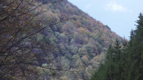 Autumn landscape in the mountains. Trees have leaves yellowed.The wind blows har Footage