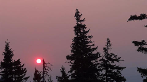Huge red sun slips beneath the branches of a dry tree in cross vault redness 38 Footage