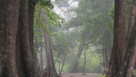 Heavy rain in the rainforest Footage