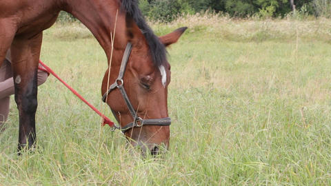 Bay horse grazing 2 Footage