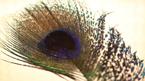 Peacock feather Filmmaterial