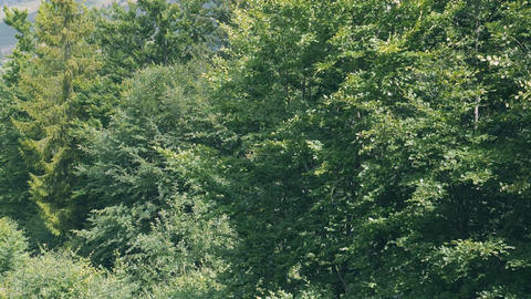Foliage on deciduous trees Filmmaterial