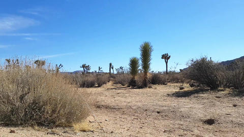 Joshua trees field, Motion time lapse of rock piles in Joshua tree national Footage