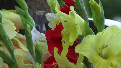 Bouquet with colorful gladiolus. Beautiful gladiolus flowers Footage