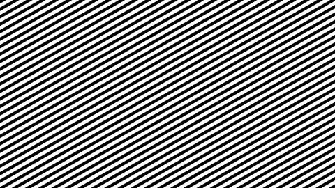 Zebra Line Movement Animation Background. Seamless Loop Footage