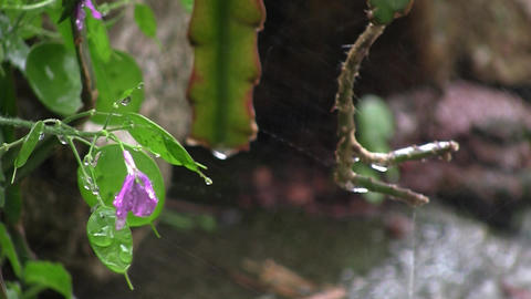 Spring rain big drops that water the flowers in the... Stock Video Footage