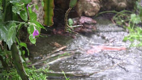 Summer rain, big drops falling on the pavement. Nature enjoys rain, green plants Footage