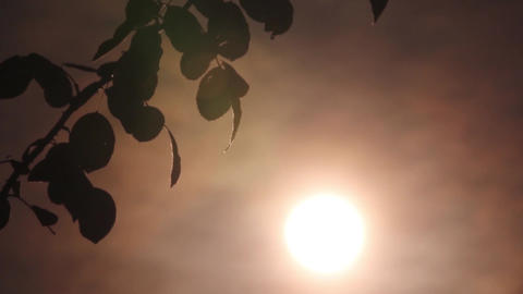 Sun in the sky a yellow ball glowing The sky is red Herbs are moving in the wind Footage