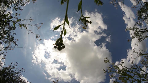 View of the clouds illuminated by the sun, in the middle of a field of white flo Footage