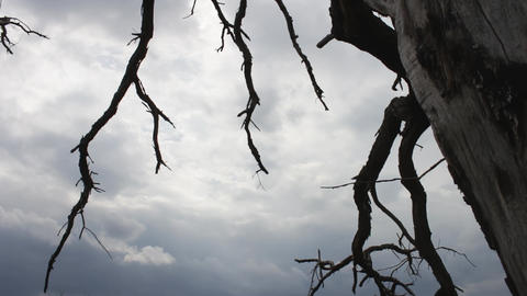 Mystical fairytale atmosphere. Cloudy sky with a dead dead tree. The camera Footage
