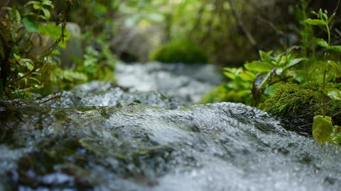 creek flowing in the forest Footage