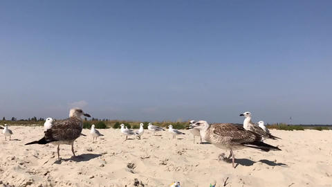 Sea gulls on the seashore, summer day Footage