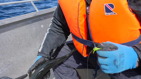 Male hands in blue working gloves remove fish from fishing line and cut the ビデオ