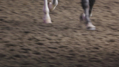 Horse Gray Legs Close Up Slow Motion Footage