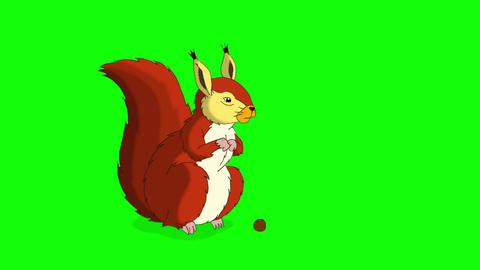 Red Squirrel Sitting and Eating Nuts. Chroma Animation