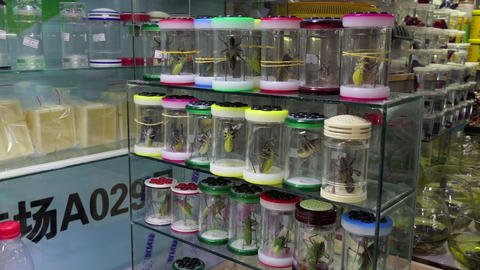 Crickets Insects Animals Pets In Chinese Shop Shanghai China Asia Footage