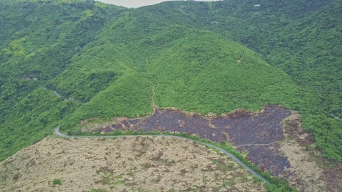 Road Divides Highland into Green Jungle and Felled Terrain Footage