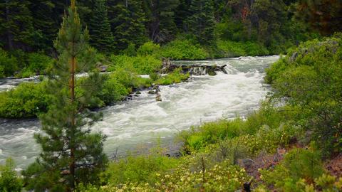 Wild Deschutes River stock footage