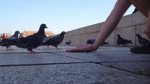 Man feeding pidgeons from hand Live Action