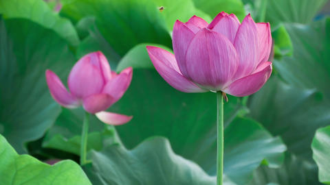 Lotus #010 Footage