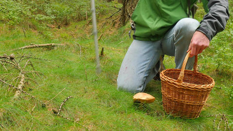 Man with medicine crutch found mushroom in forest grass. Man in blue jeans, Image