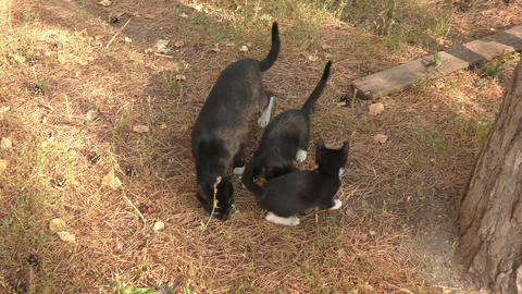 Cat and kittens Stock Video Footage