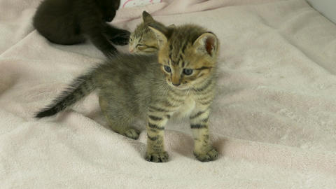 Striped kitten standing in front of litter 画像
