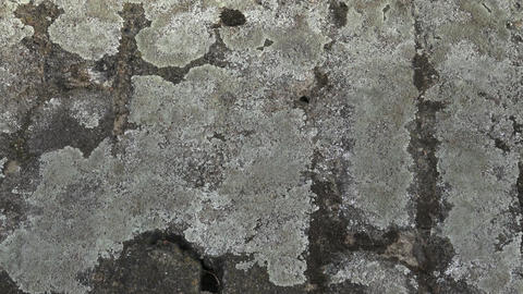Grey stone covered by lichen. Close-up of stone covered by lichen Footage