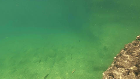Small fish floating under water. Bottom of the Adriatic sea Footage